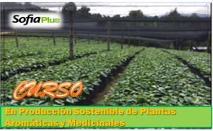 CURSO DE SOSTENIBILIDAD DE PLANTAS